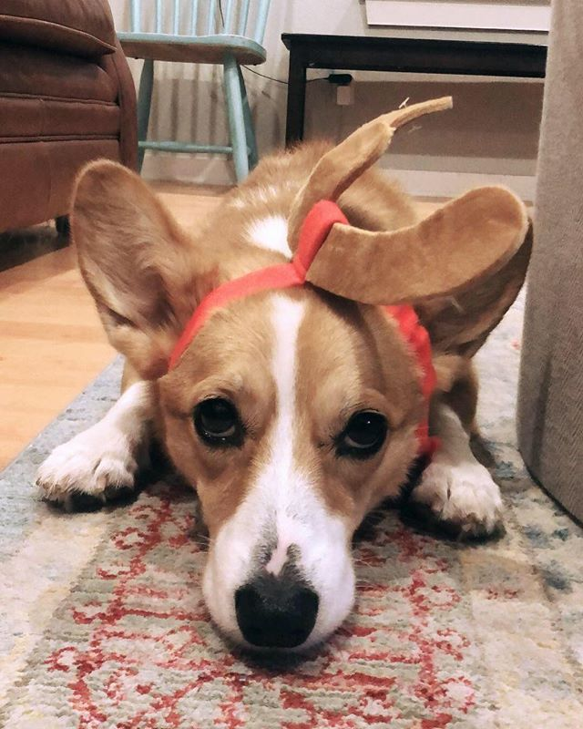 OH DEER. // maybie is the most when it comes to Christmas spirit 😘
