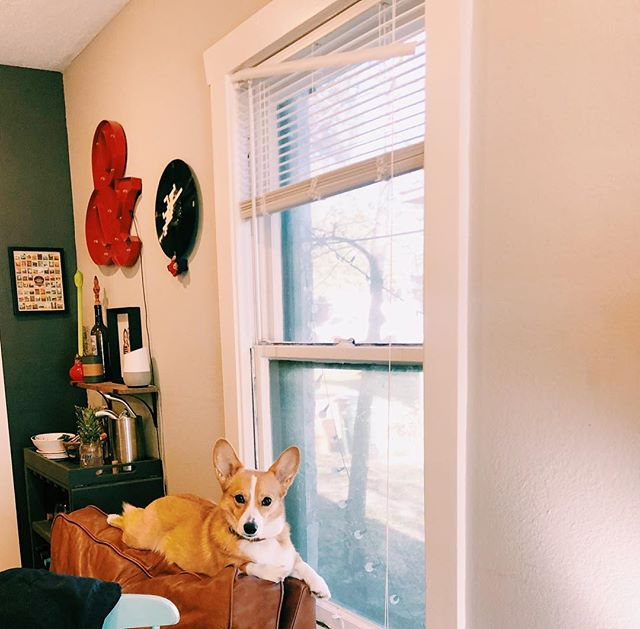 Sunday's with a corg
