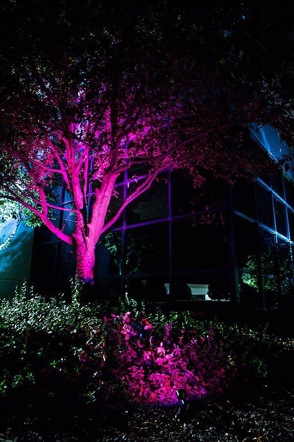 led-up-light-garden-office-building-landcaping.jpg