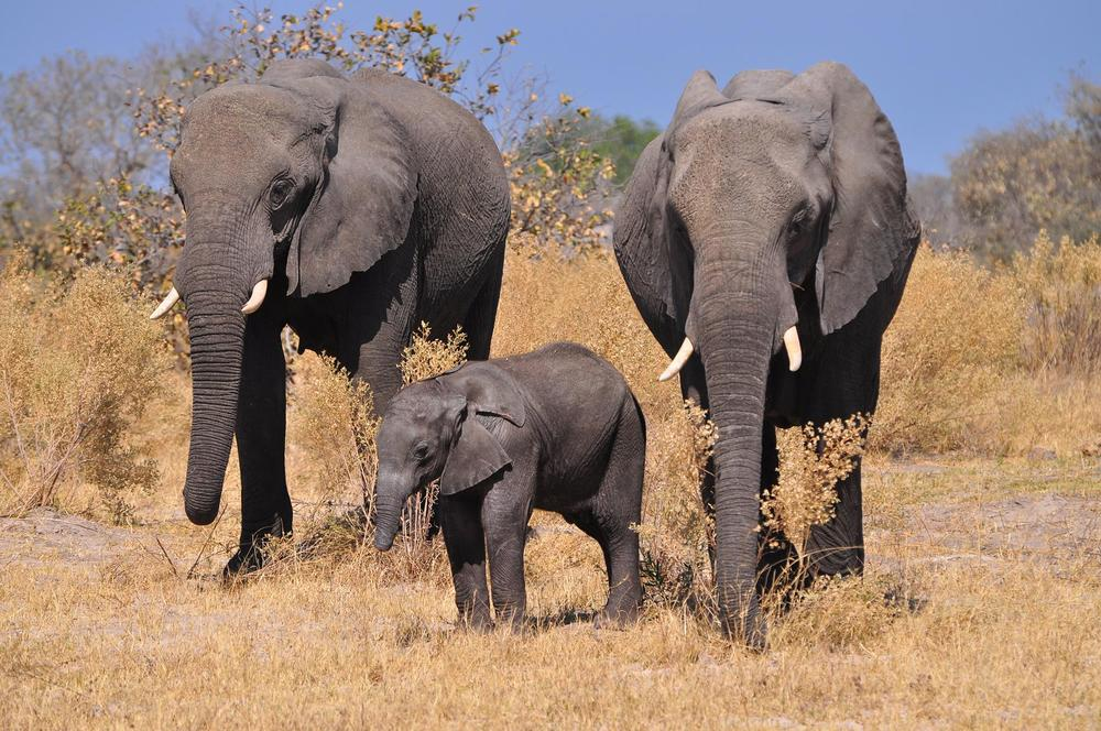 GrassTrack Safaris take you deep into the heart of the bush.