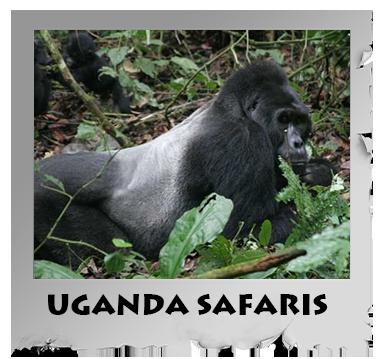 uganda safaris.png