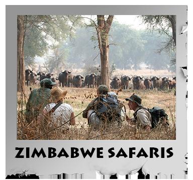 zimbabwe safaris.png