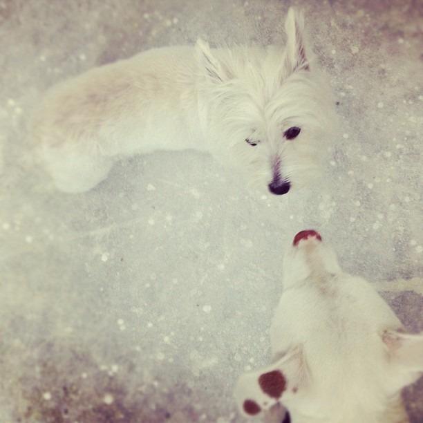 white on white aka Leelee & Lola (Taken with  Instagram )