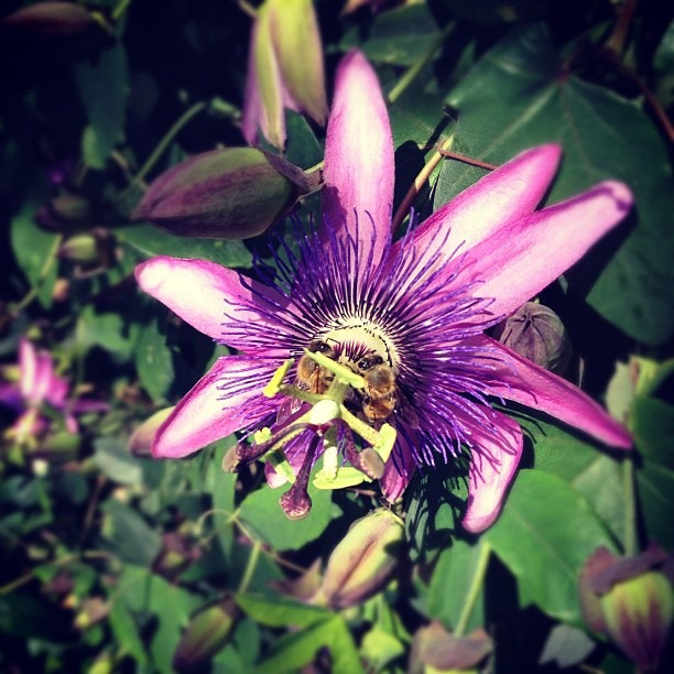 I,bee,purp (Taken with  Instagram )