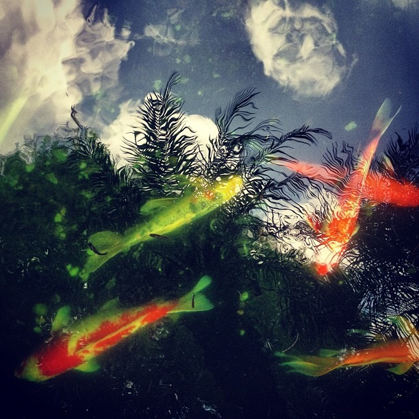 #koi #clouds (Taken with  Instagram )