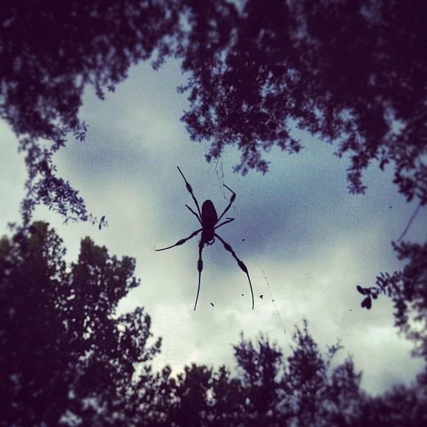 #spider weaving (Taken with Instagram)
