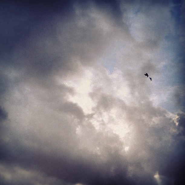 #flyingbird in the #clouds  (Taken with  Instagram )