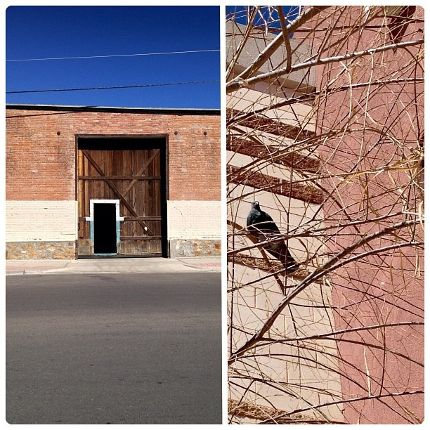 #sunny #Segundo #barrio #urban #spring #Wyler #industrial #building & #iridescent #pigeon #floral