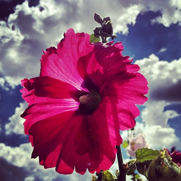 #flowerpower #beautiful #summer #life #love #motherearth #kissing the #skyclouds #delight #paradiseonearth