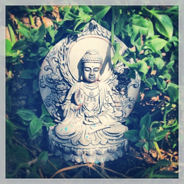 #garden #buddha #meditation among the #succulents under the #tree Hummers are gone w/the #summer Let the #cold begin