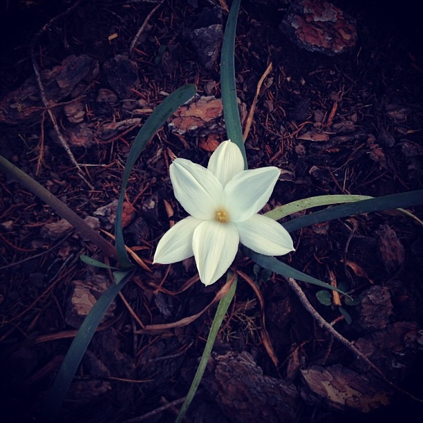 #love #neighborhood #walk #flower of #life