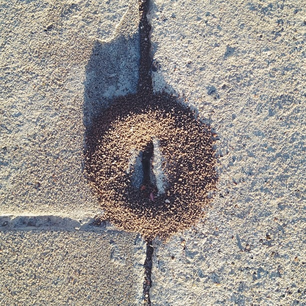 #ant #mound #love #perfect #yoni #entrance #punani #vagina #vulva #enter the #earth #womb