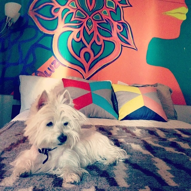 #Leelee #digs her new #bed #loft #westie #Inca #neonpalace #patterns #textures #westiesarethebesties  @westiegram