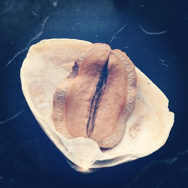 #yoni #seed #tree #eye #peepeeroomart #gowanus #brooklyn #love