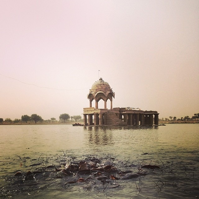 #goldencity #lake #crazy #hungry #holy #catfish #love #jaisalmer #india #travel #adventures