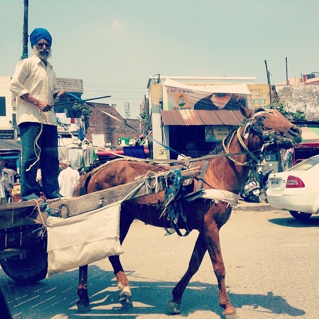 #punjab #culture #transportation #sikh #love #travel #india #horsecarriage #pimp