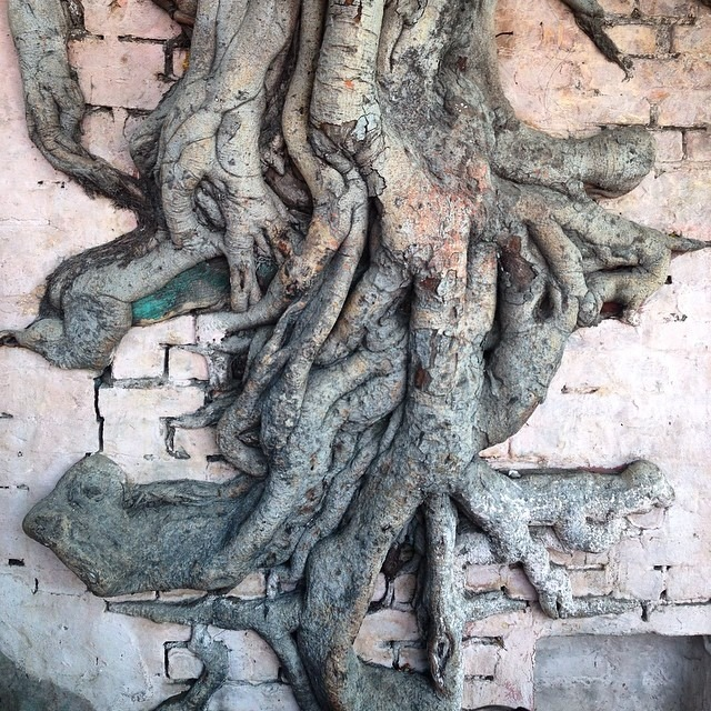 #nature #nurture #coexistence #tree#wall #adaptation #india #love #travel #sharing #space #nogentrification #respect #sacred #space #arboldevida #treeoflife #nofilter