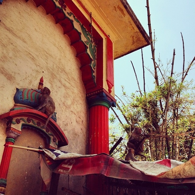 #hanuman #day in #India #travel #monkey #love