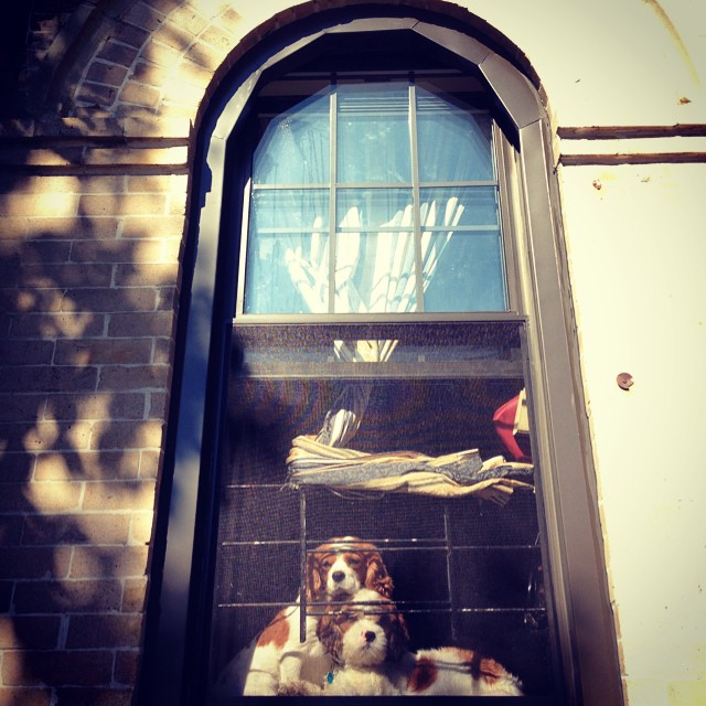 #furry neighbors checking Leelee #family #love #streetstroll #window #dogsofinstagram