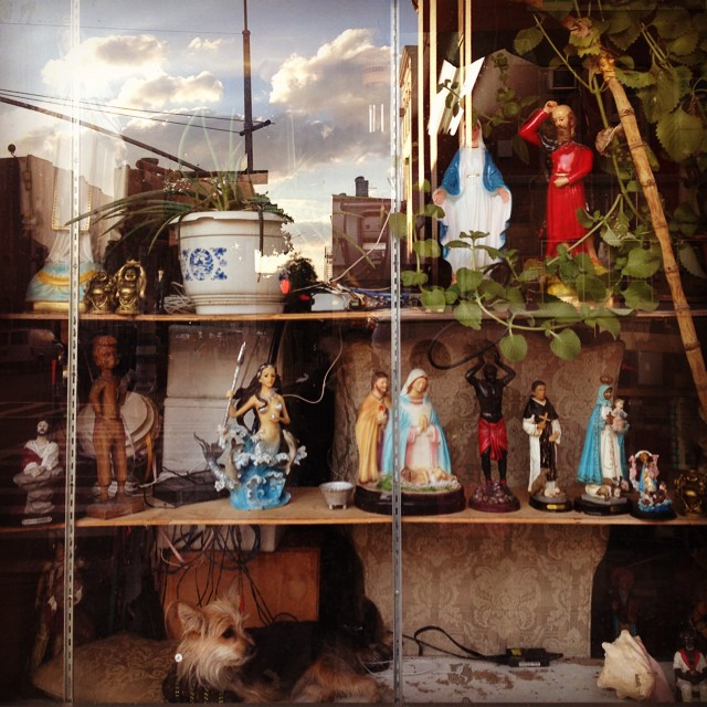 Stroll in the #bush #hood #local #botanica #santos #brooklyn #Itzcuintli #dogsofinstagram #windowtothesoul
