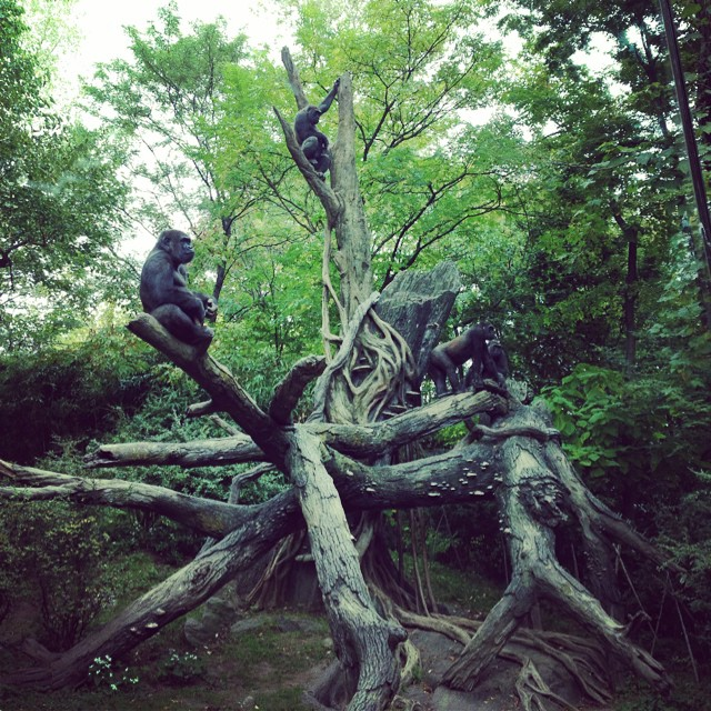 @bronxzoo w the fam having a #wildlife #jungle in the city #gorilla #love