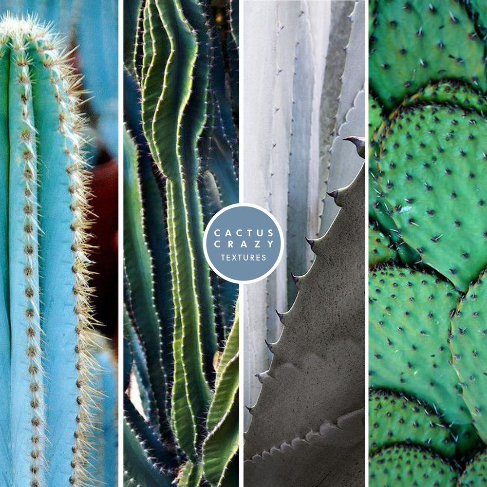 AustralianLiving_CactusCrazyTextures