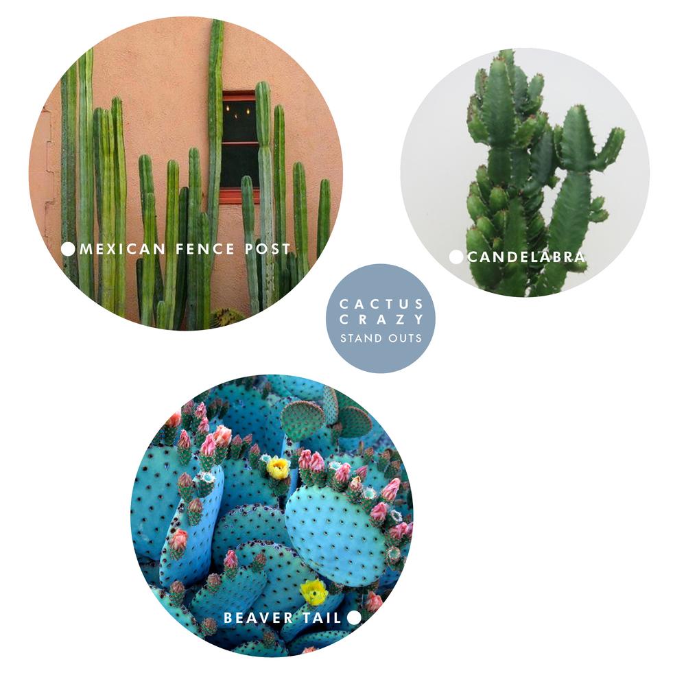 AustralianLiving_CactusStandOuts