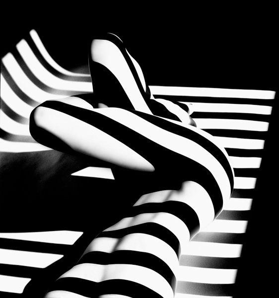 Francis Giacobetti, Zebras.jpg