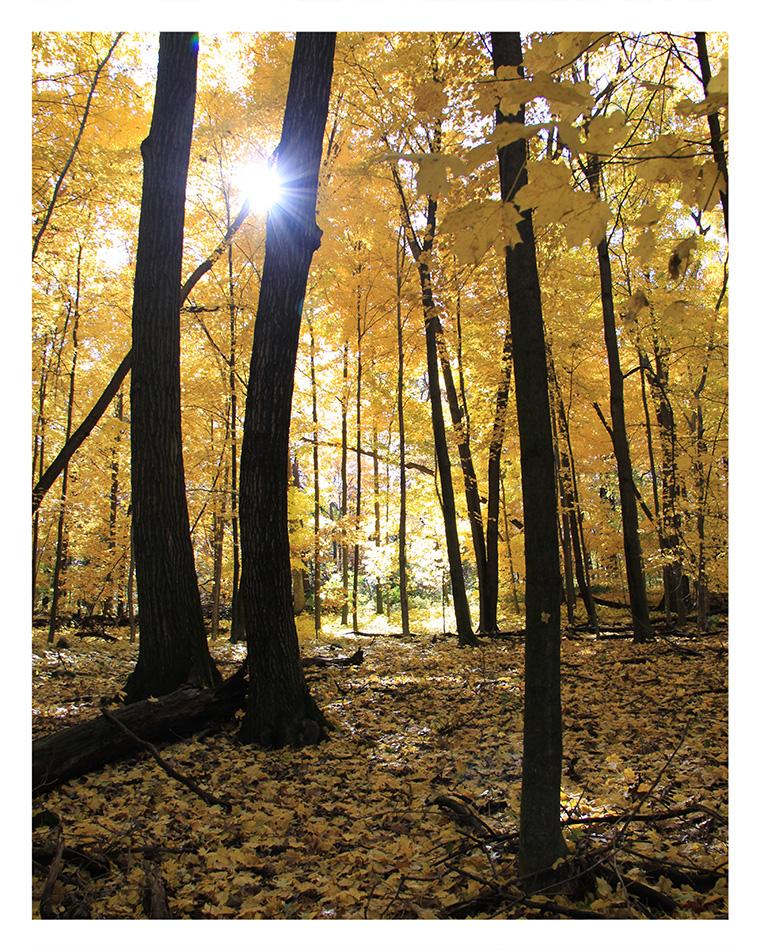 An Arboretum Sunburst  © Bill Blansett; I'm Dreaming