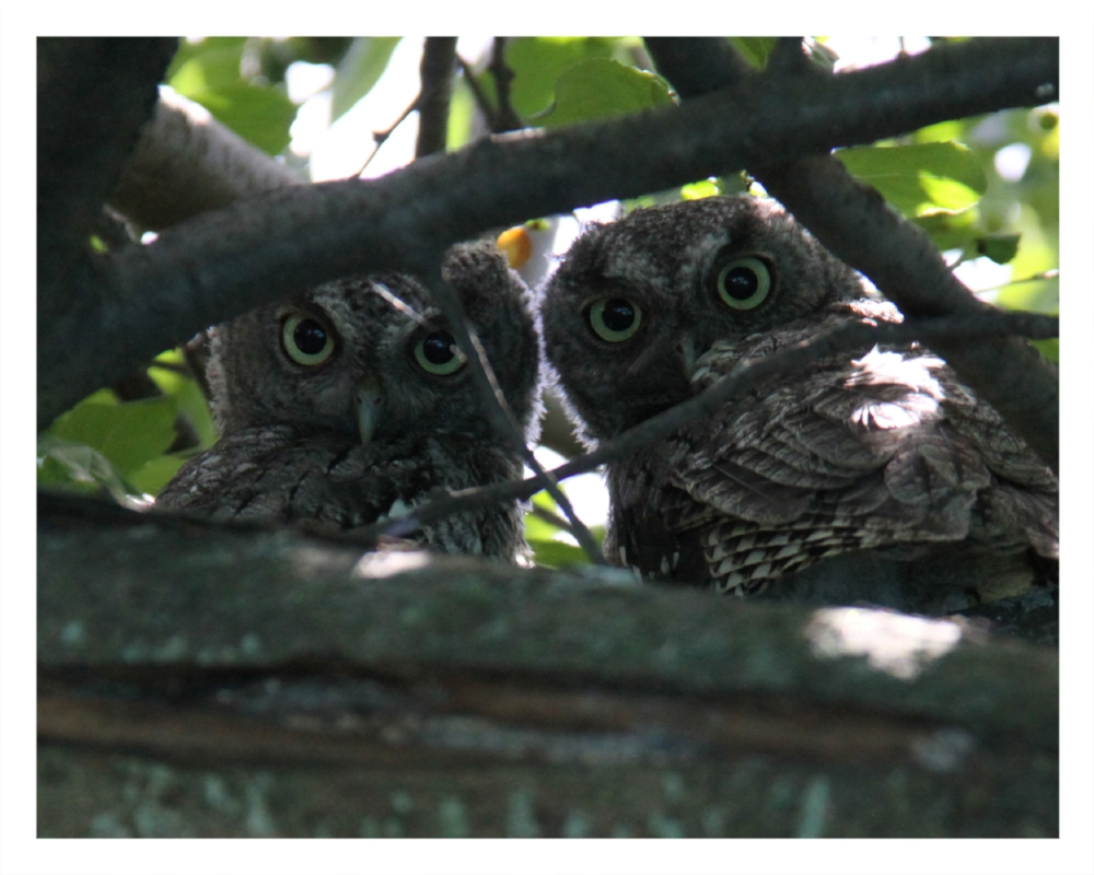 Peek-a-Hoo  © Bill Blansett; Our Colleagues