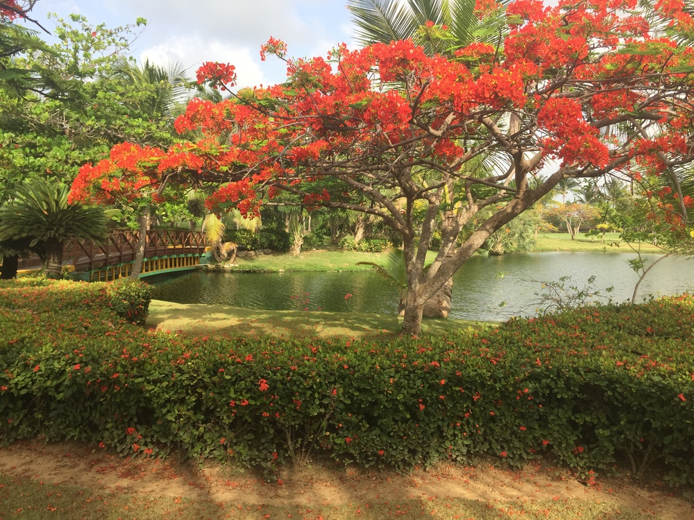 Yard at Cocotal Golf and Country Club