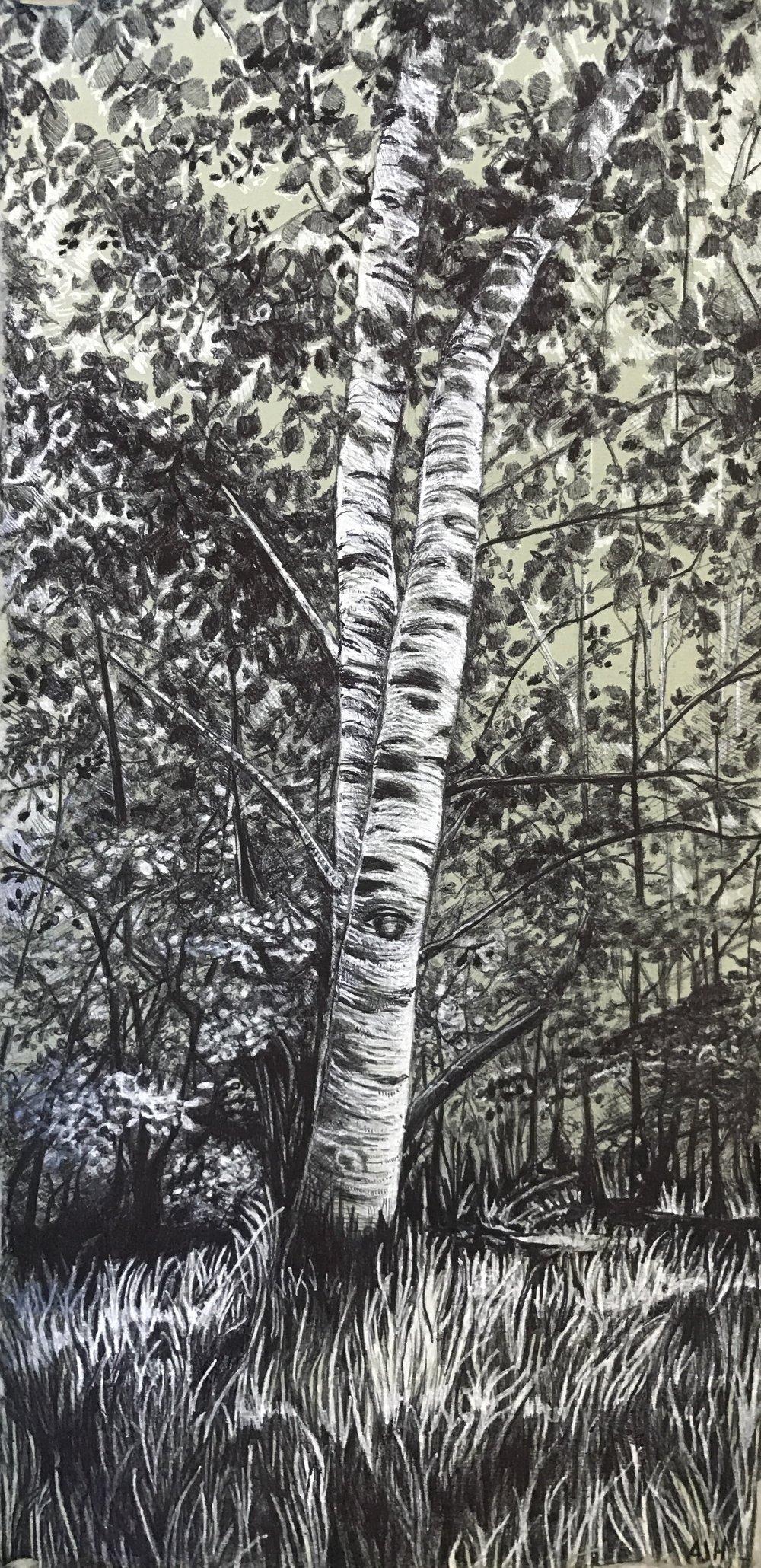 Birch, Treescape II