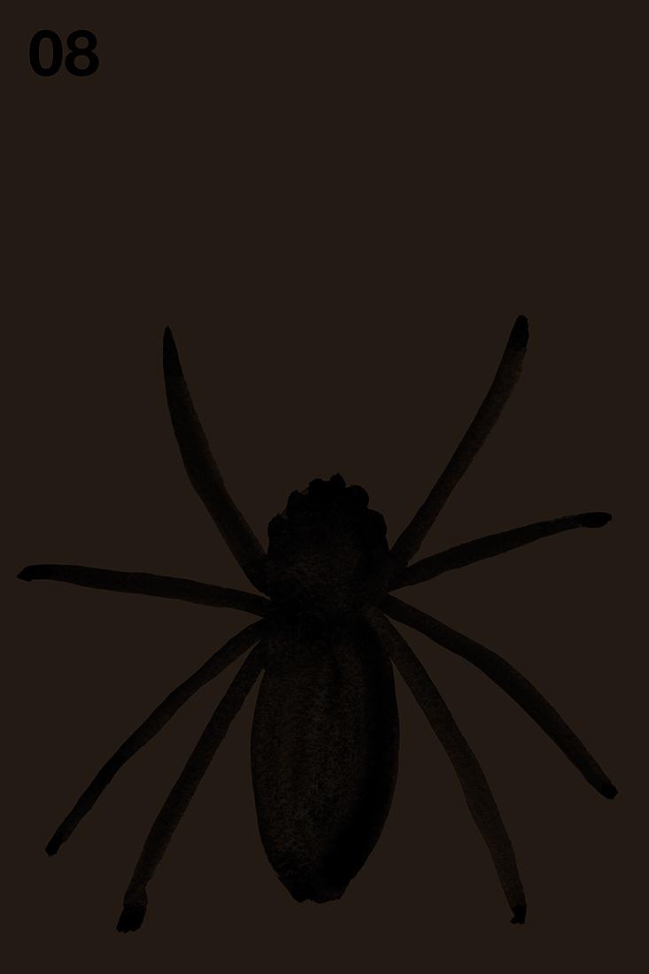 spider#08.jpg