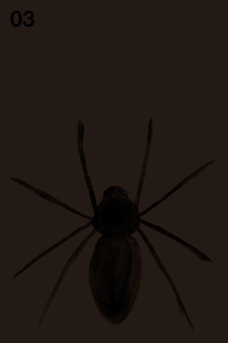 spider#03.jpg