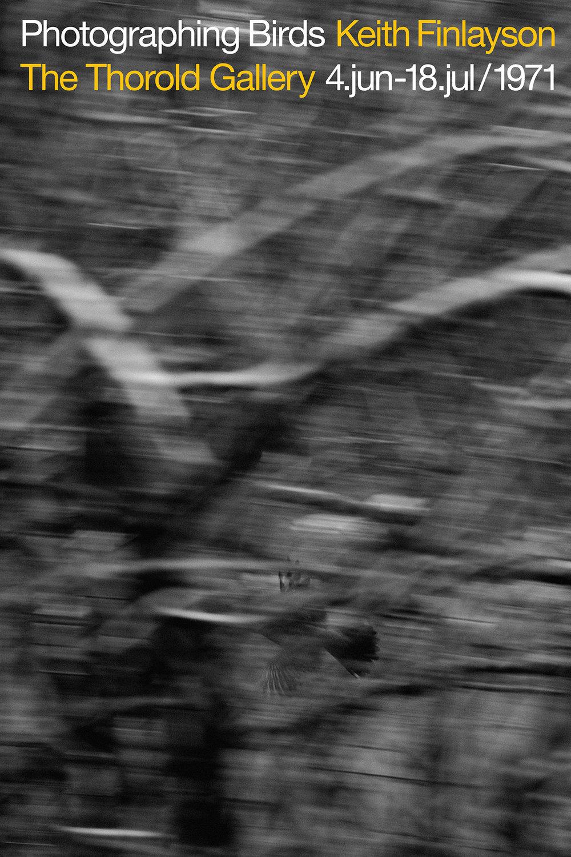 43 Bird final.jpg