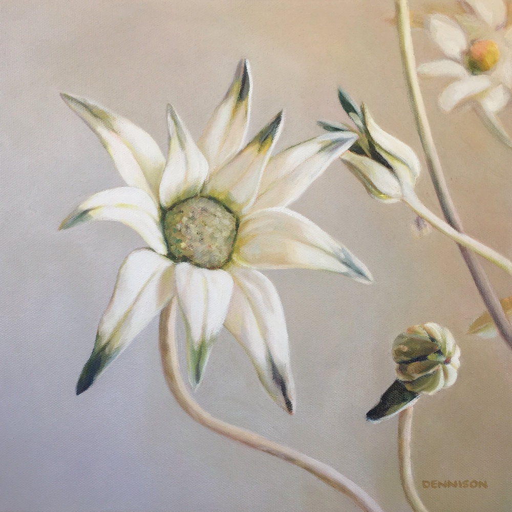 Flannel Flower Oil on Canvas, 30cm x 30cm, SOLD