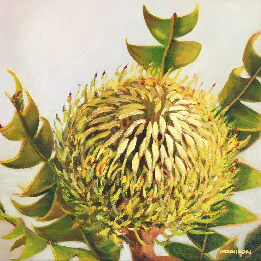 Banksia Baxteri   Oil on Canvas, 30cm x 30cm