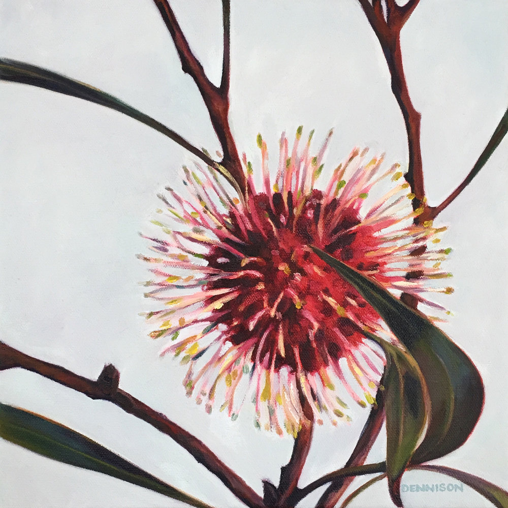 Pincushion Hakea   Oil on Canvas, 30cm x 30cm