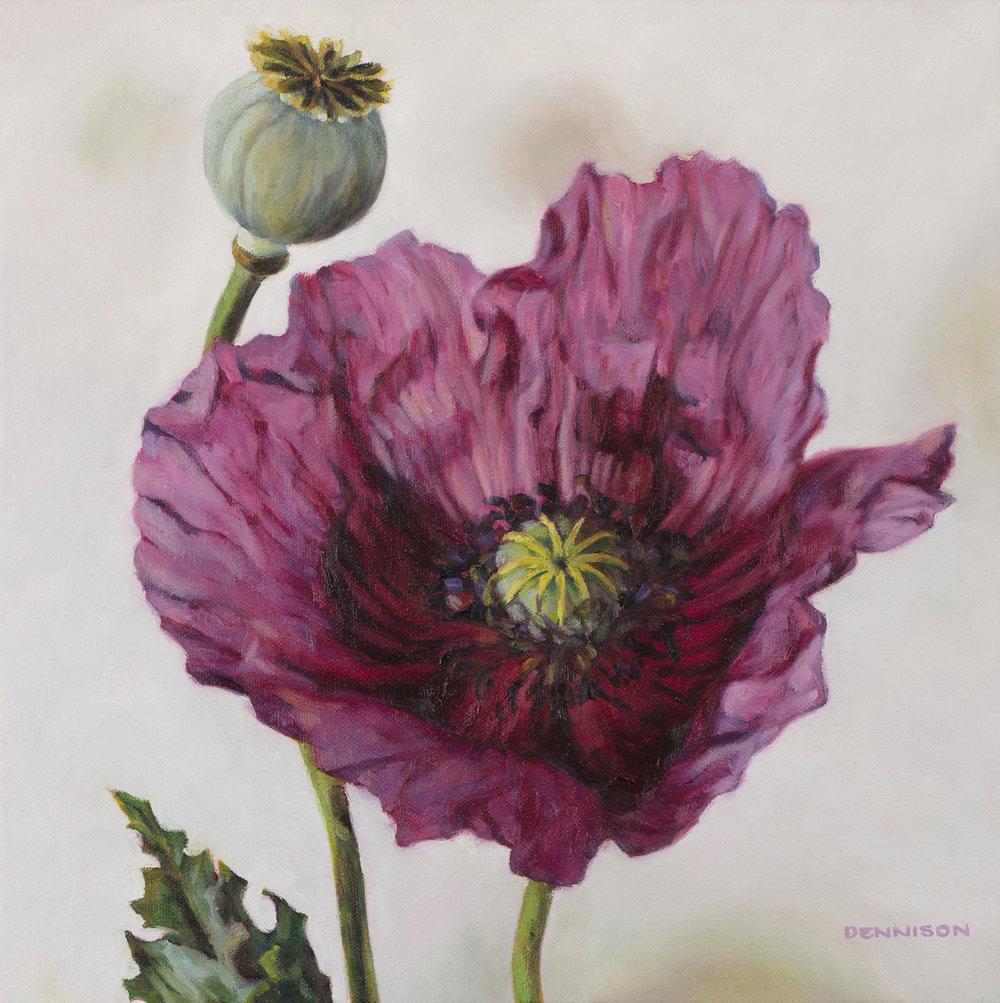 Oriental Poppy   Oil on Canvas, 36cm x 36cm
