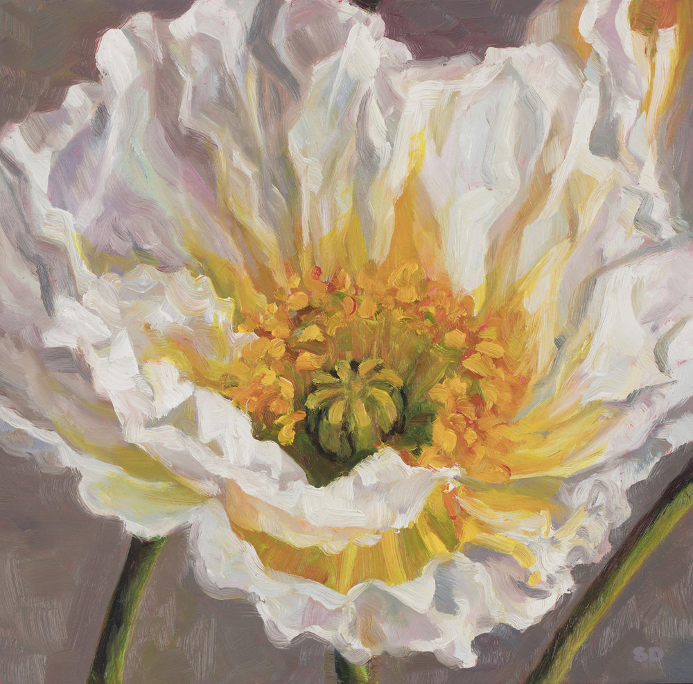 White Poppy   Oil on Panel, 20cm x 20cm
