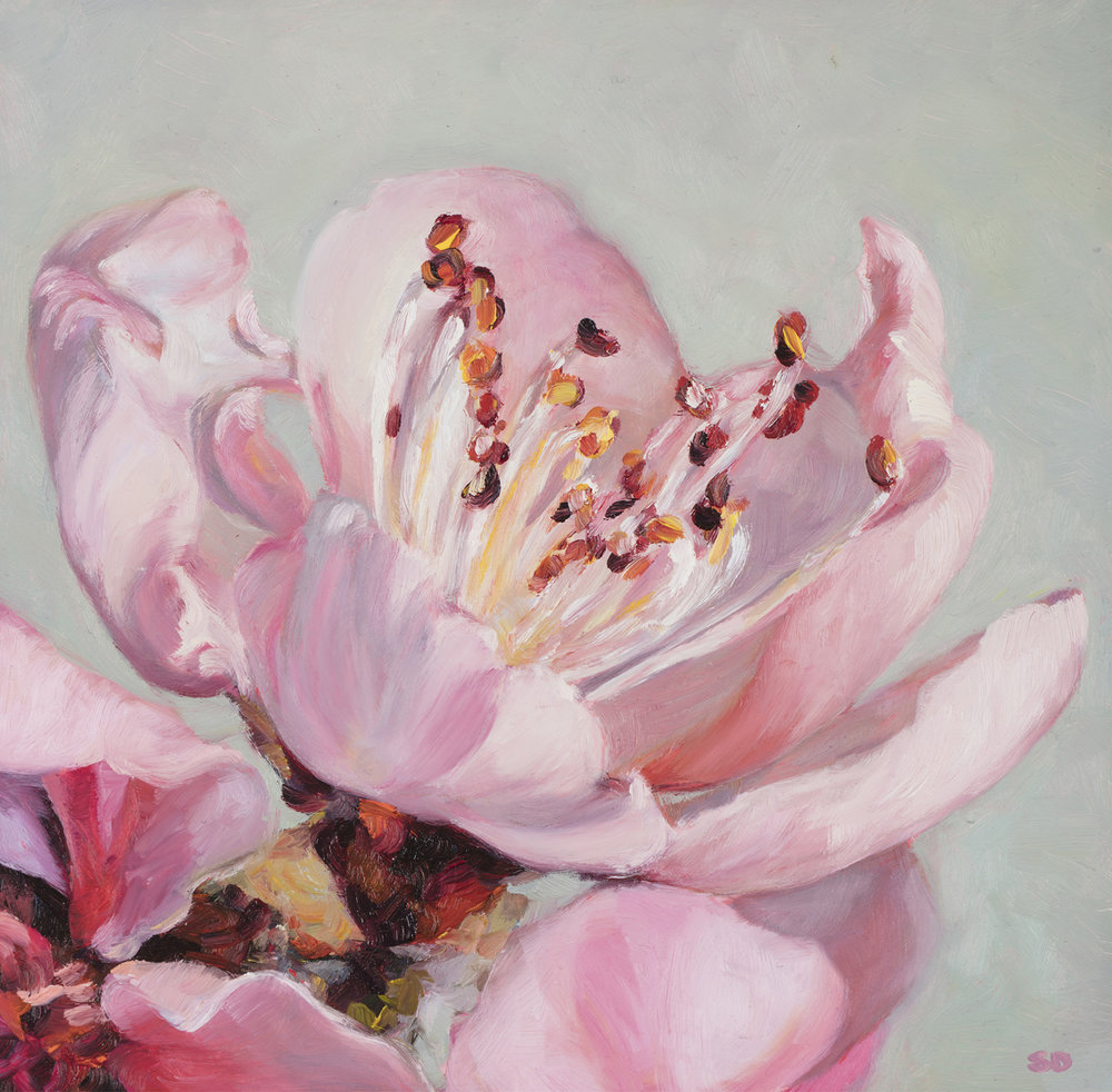 Pink Peach Blossom   Oil on Panel, 20cm x 20cm