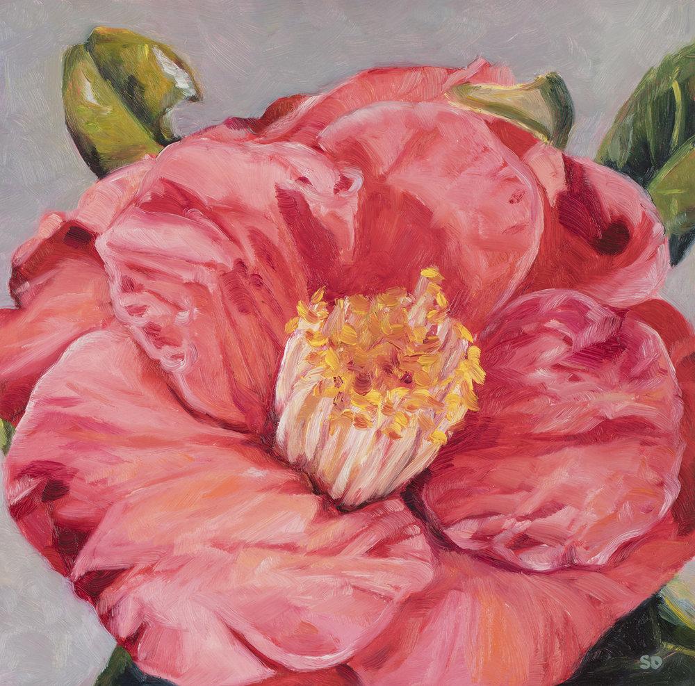 Lila's Camellia   Oil on Panel, 20cm x 20cm