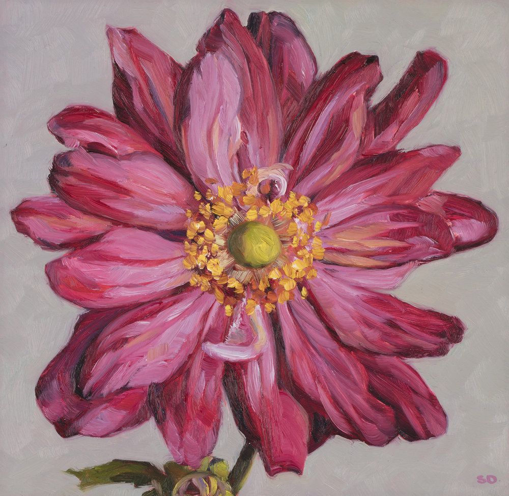 Windflower   Oil on Panel, 20cm x 20cm