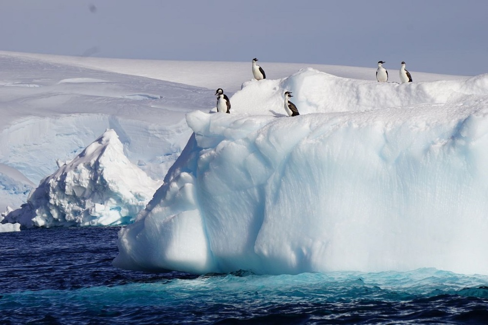 Ice Bergs Loaded with Wildlife