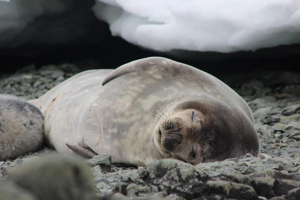 Meet a Seal