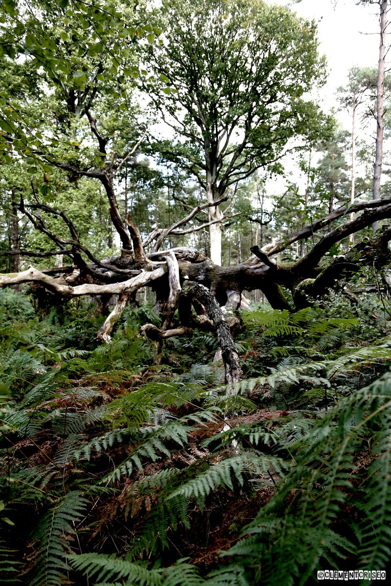 Squelette de forêt citadine