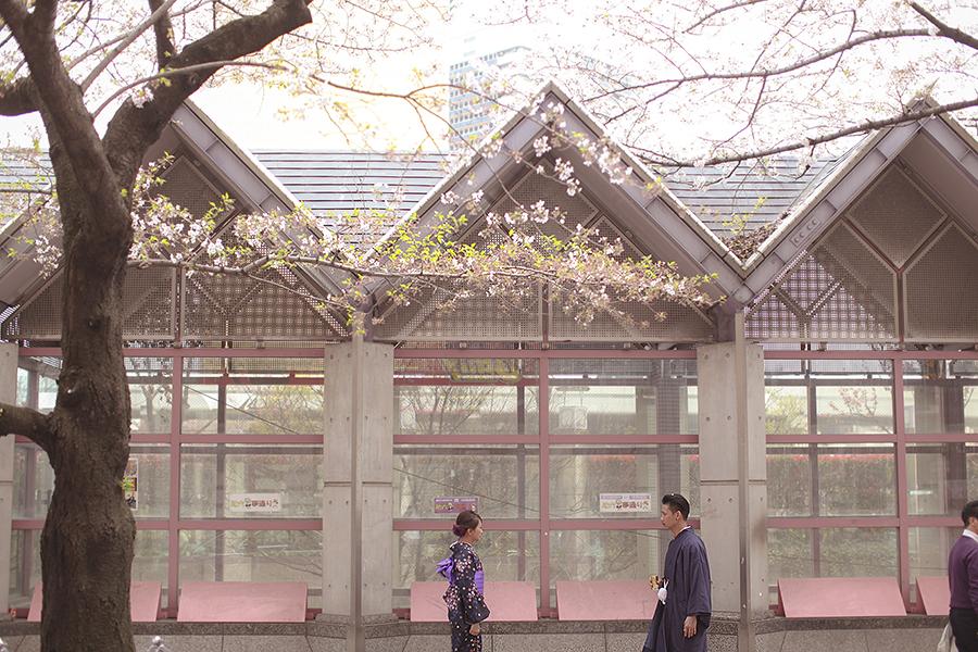tokyo hakone japan spring sakura . engagement wedding photography by kurt ahs . ns + eu . 0403.jpg