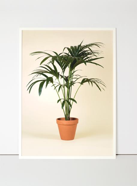 product_flora_001.jpg