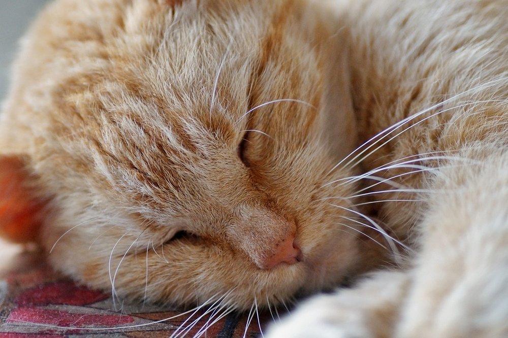 cat-3396820_1280.jpg