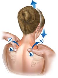 shoulder_1c.jpg